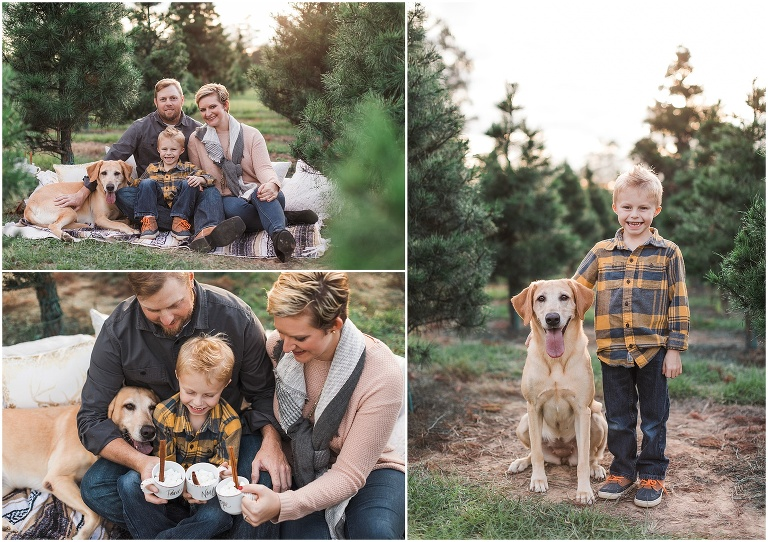 Santa + Christmas Tree Farm Mini Sessions